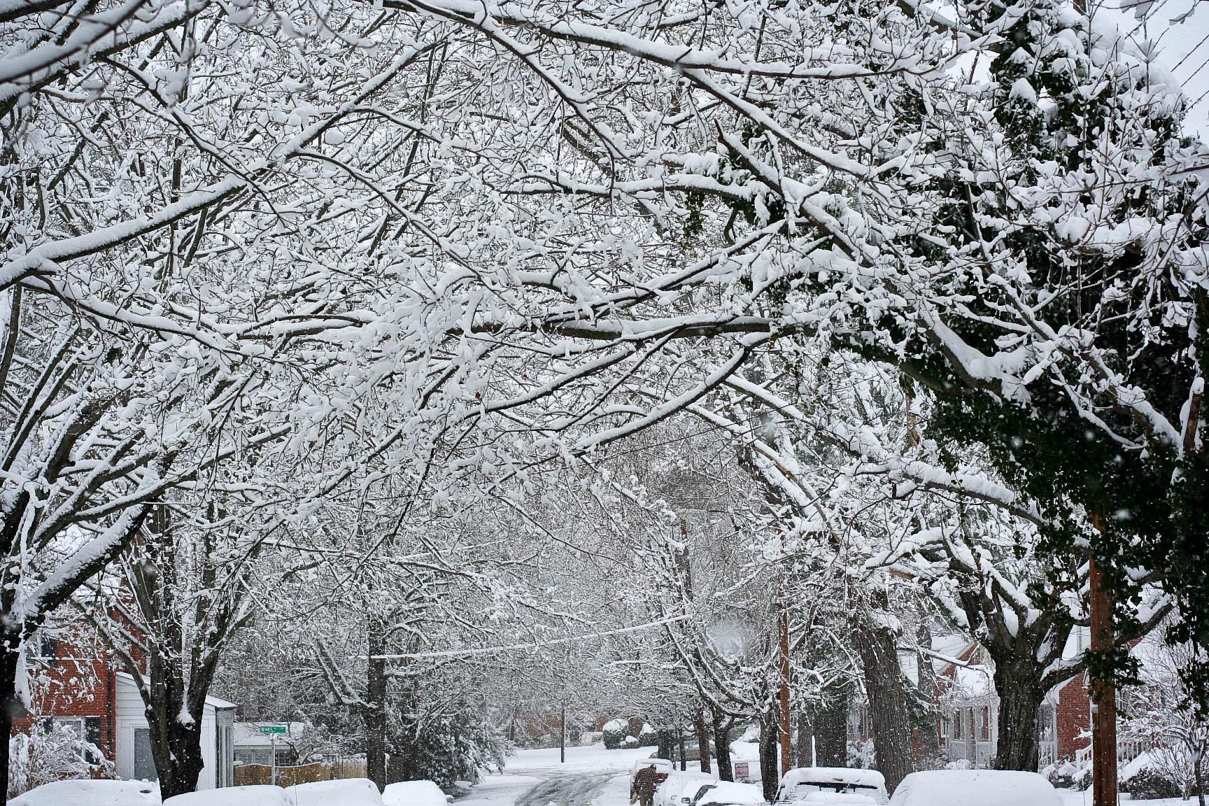 snow-glory.jpg
