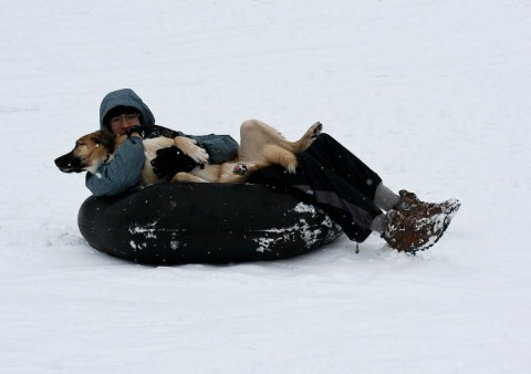 snow-sledding-dog