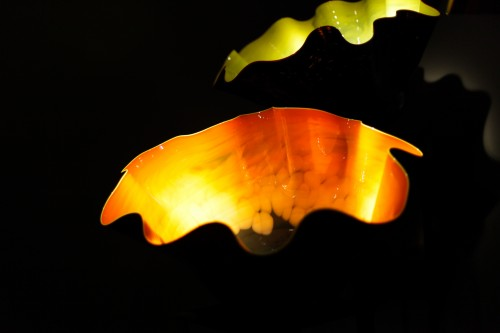 chihuly love-22